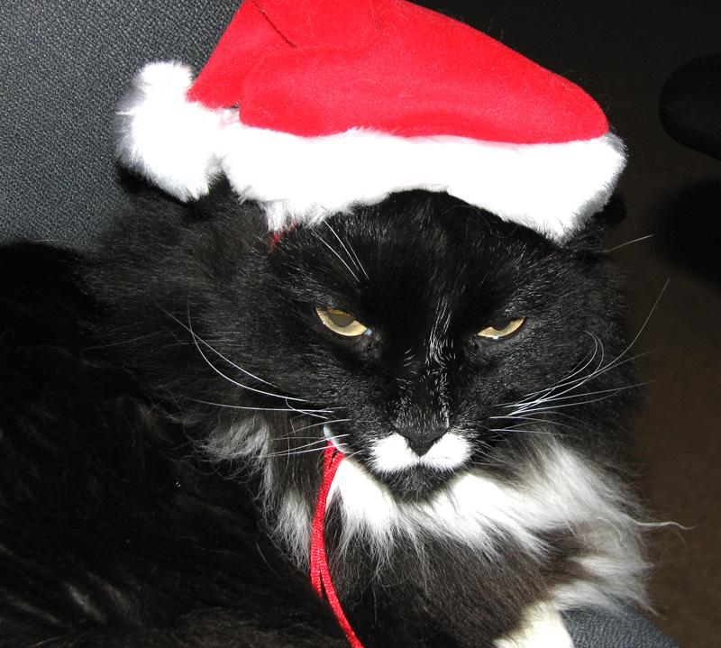 Thelma Santa