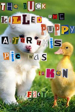 Asshole Ducks