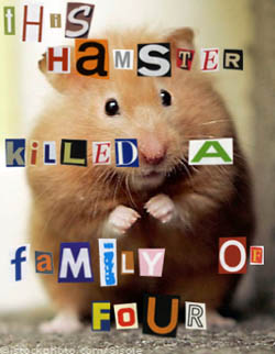 Amater hamsters in the asshole young