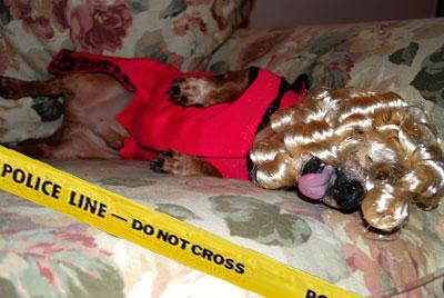 Dead Hooker Dog