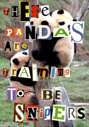 Killer Pandas