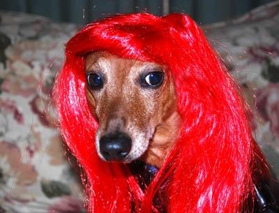 Redheaded Jack